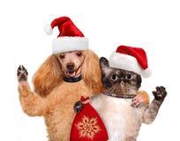 猫和狗在红色圣诞节帽子 免版税库存图片
