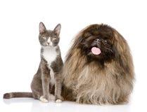 猫和狗摆在 背景查出的白色 免版税库存照片