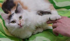 猫和现有量 库存照片