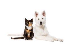 猫和白色小狗 免版税库存图片