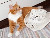 猫和白色帽子 库存图片