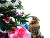猫和礼品 库存图片