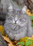 猫和秋天 免版税库存图片