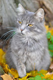 猫和秋天 库存照片