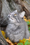 猫和秋天 图库摄影