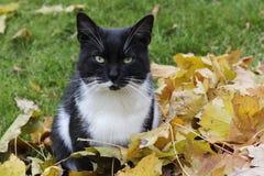 猫和秋天 免版税图库摄影