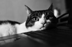猫和笔记本 免版税库存照片