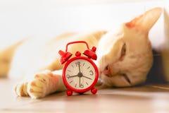 猫和红色闹钟 免版税库存图片