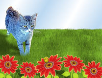 猫和臭虫 库存照片