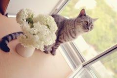 猫和花 免版税库存照片