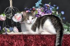 年轻猫和花 免版税库存照片