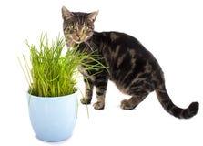 猫和草 免版税库存图片