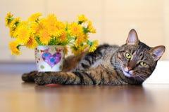 猫和蒲公英 免版税库存照片