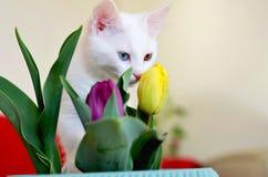 猫和郁金香 库存照片