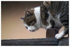 猫和雪 免版税库存图片
