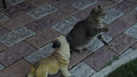 猫和风筝 影视素材