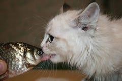 猫和鱼 库存图片