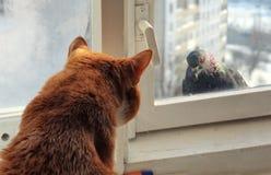 猫和鸽子 免版税库存图片