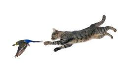 猫和鹦鹉 免版税库存照片