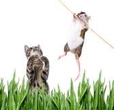 猫和鼠标 库存照片