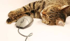 猫和鼠标 图库摄影