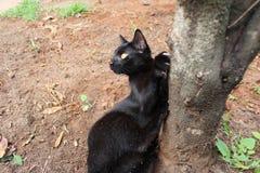 猫和死的树 库存图片