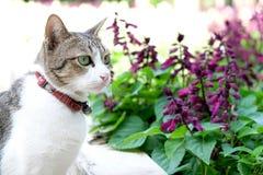 猫和紫色花 免版税库存照片