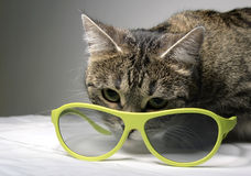 猫和3d玻璃 免版税库存照片
