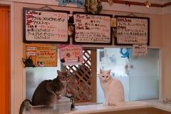 猫咖啡馆在东京,日本 库存照片