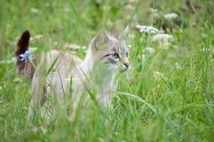 猫咪 免版税图库摄影