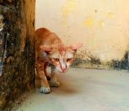 猫咪 图库摄影