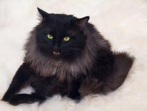 猫哇 免版税图库摄影