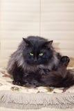 猫哇 免版税库存照片