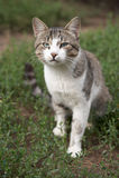 猫哨兵 图库摄影