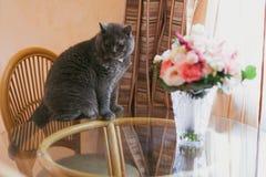 猫嗅花 库存照片