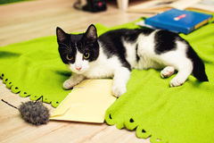 猫国内使用 库存图片