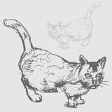 猫图画油脂 库存照片