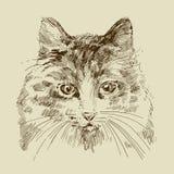 猫图画 库存例证