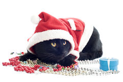 猫圣诞老人 库存照片