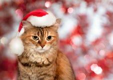 猫圣诞节例证全部赌注雪雪花冬天 戴圣诞老人帽子的猫 库存照片