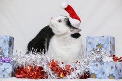 猫圣诞节例证全部赌注雪雪花冬天 免版税库存图片