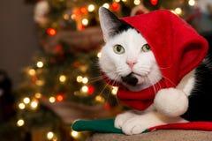猫圣诞节例证全部赌注雪雪花冬天 免版税库存照片