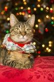猫圣诞节例证全部赌注雪雪花冬天 图库摄影