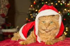 猫圣诞节例证全部赌注雪雪花冬天 库存图片