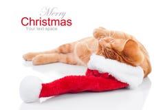 猫圣诞节梦想 免版税库存图片