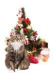 猫圣诞节老虎结构树年 免版税库存图片