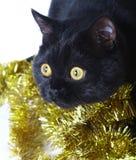 猫圣诞节装饰品 图库摄影
