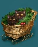 猫圣诞节雪橇二 库存图片