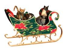 猫圣诞节 库存照片