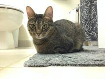 猫在一个白色和灰色卫生间里 免版税库存照片